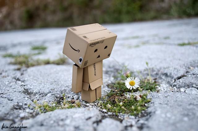 Danbo_likes_flowers