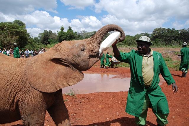 elephant-103588_640