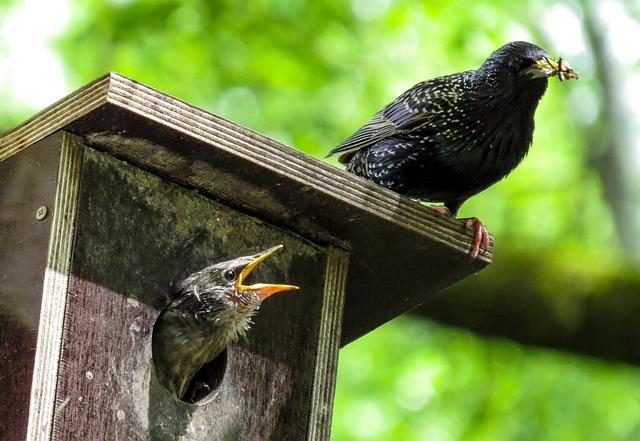 bird-759955_640